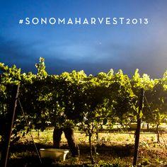 #RodneyStrong #Sonoma #SonomaHarvest #Harvest2013 Photo by Kristen Newsom (@Kristen Newsom)