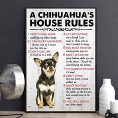 Funny Chihuahua Pictures, Dont Call Me, Choose Me, Puppy Love, Fur Babies, The Outsiders, Puppies, Chihuahuas, Pets
