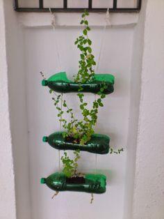Reciclar botellas de plástico en unas macetas