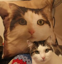 Cool cat pillow.