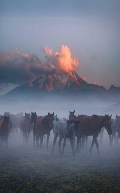 Wild Horses Erciyes Mountain,Turkey More