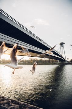 UFO and New Bridge in Bratislava Outdoor Photography, Nature Photography, Travel Photography, Bratislava, Austria Travel, Travel Wallpaper, Adventure Photography, Aesthetic Photo, Countries Of The World