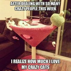 Maybe its the martini cat condo in the middle of my living room. Maybe its the martini cat condo in the middle of my living room. Funny Animal Pictures, Funny Animals, Cute Animals, Animal Memes, Crazy Cat Lady, Crazy Cats, Cat Condo, Cat Room, Cat Furniture