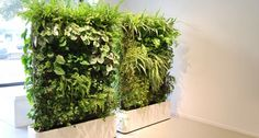 Petrified artificial green wall vertically placed at Columns .Totally love this - Get this look with our stunning artificial green wall. Take a look at our website. Different plant options available Artificial Indoor Plants, Small Indoor Plants, Indoor Plant Wall, Fake Plants, Outdoor Plants, Artificial Green Wall, Artificial Flowers, Potted Plants, Indoor Outdoor