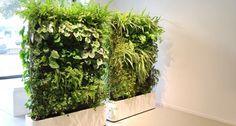 Moving Hedge - Sempergreen