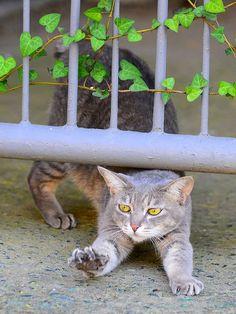 """* * """" Unders de fence be betters den overs itz."""""""