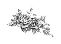 rose tattoo illustration - Pesquisa Google