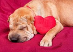 10 Reasons Dogs Are Better Than Boyfriends   Pets - Yahoo Shine