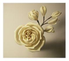 Rose | Flickr - Photo Sharing!
