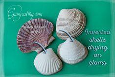 {Invert gumpaste/fondant shells on clams to dry}