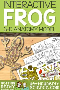 Life science and biology resources for class or homeschool. Engage students with interactive notebooks, paper dissection models, full lessons and more! Biology Lessons, Science Biology, Science Lessons, Teaching Science, Science Education, Life Science, Frog Activities, Human Body Activities, Steam Activities