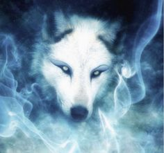 Magic White Wolf Wolves Art Beautiful Pictures Images