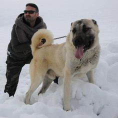 The Powerfull KANGAL: