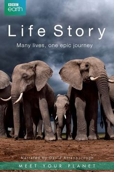 Life Story: Series 1Love a good nature documentary? Then this British series should pique your interest. Arriving June 20 #refinery29 http://www.refinery29.com/2016/05/111721/netlfix-arrivals-june-2016#slide-67