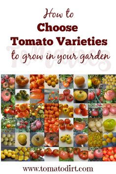 3 ways to choose tomato varieties for your garden (image courtesy Tomato Bob via Tomato Dirt) Types Of Tomatoes, Yellow Tomatoes, Growing Tomatoes In Containers, Small Tomatoes, Heirloom Tomatoes, Growing Vegetables, Cherry Tomatoes, Veg Garden, Tomato Garden