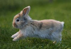 Did you know that bunnies are still used in harmful cosmetics tests in the U.S.? #BeCrueltyFree http://www.humanesociety.org/becrueltyfree