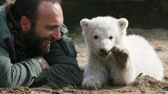 """Résultat de recherche d'images pour """"photos ours polaires insolites"""""""