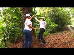 Táchira Turismo en Potencia - Parque Nacional Chorro El Indio     Parte 1