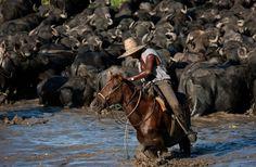 Vaqueiro de búfalo, serra do Arari,PR Brasil - By Araquém Alcântara