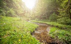 Photograph Sun light spring by Benea Adrian on 500px