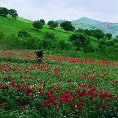 Kordestan landscape
