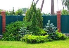 Картинки по запросу клумбы с хвойными растениями