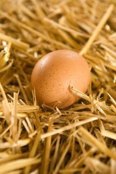 Correct way to wash farm fresh eggs!