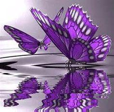 mariposas - Yahoo Image Search Results