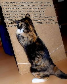 I will not be a naughty kitten.