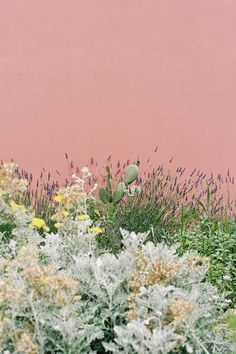 Pink wall in a desert garden - Wild garden with cactus