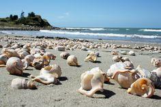 Mahanga Beach, Mahia Peninsula, The North Island, New Zealand