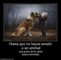 Hasta que no hayas amado  a un animal  una parte de tu alma estará dormida.