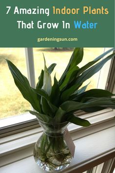 If you are looking forward to having indoor plants that are very easy to grow in water, then you have landed at the right place. Some plants don't need soil to grow, and Yes! These varieties easily grow in water initially without using an ounce of soil! Gardening For Beginners, Gardening Tips, Bucket Gardening, Indoor Gardening, Lilly Garden, Water Plants Indoor, Low Light Plants, House Plants Decor, Plant Decor