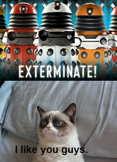 Dr who needs grumpy cat as his new companion. Make it so Mr Moffet. But be warned DO NOT KILL OFF GRUMPY CAT! If you are a whovian. Do not abbreviate Doctor. Grumpy Cat Humor, Cat Memes, Funny Memes, Grumpy Kitty, Cats Humor, Memes Humor, Funny Quotes, Dry Humor, Silly Jokes