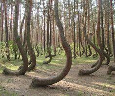 Forêt  de Merlin l'Enchanteur.