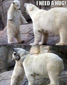 Polar bears need hugs too