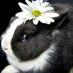 Blue eyed beautiful wabbit