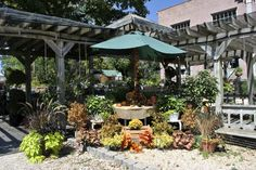 It's looking like Fall at #starkbros #gardencenter