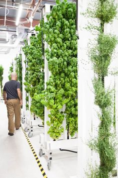207 Best Vertical Farming images in 2017 | Vertical farming