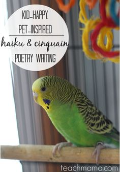 kid-happy, pet-inspired poetry writing |  haiku and cinquain | teachmama.com @Pets Add Life poetry contest #weteach