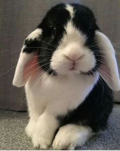 Is this not the most adorable bunny ever:? I want to bring this one home.