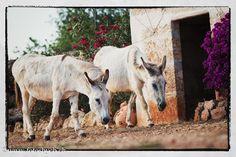 Fanny und ihr Sohn Jesper schlendern über die Finca :-)