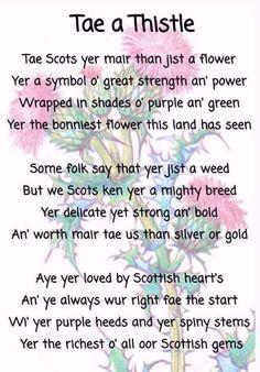 30 Lovely Scots Poems for Kids Scottish Poems, Scottish Gaelic, Scottish Thistle, Scottish Highlands, Scottish Sayings, Scottish Flowers, Scottish Clans, Scotch, Scotland History