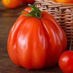 Tomato Corazon