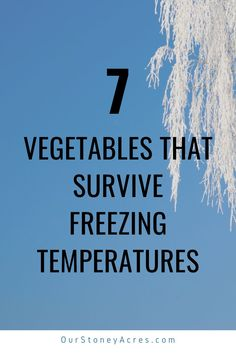 If you would like to garden year-round then you need to learn the vegetables that can survive freezing. These 7 Veggies will survive and even thrive in temperatures under 32 degrees. #gardening #vegetablegardening #backyardgardening