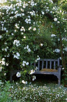 Garden Bench!