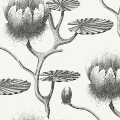 250 Meilleures Images Du Tableau Papier Peint Noir Blanc En 2019