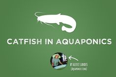 Catfish in Aquaponics - Bright Agrotech - A guest post from expert Aleece Landis. Find out everything you want to know about catfish in aquaponics here!