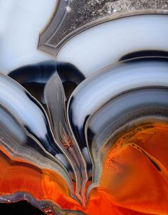 "Agate ""Flower Condor"" by Captain Tenneal, via Flickr"