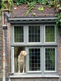 Dog, Bruges